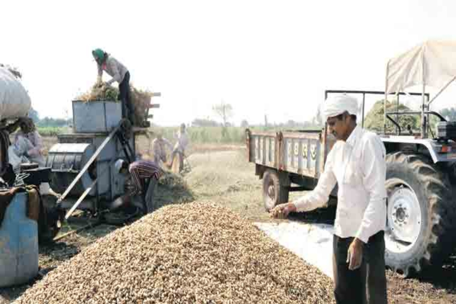Groundnut purchased at MSP piles misery on government