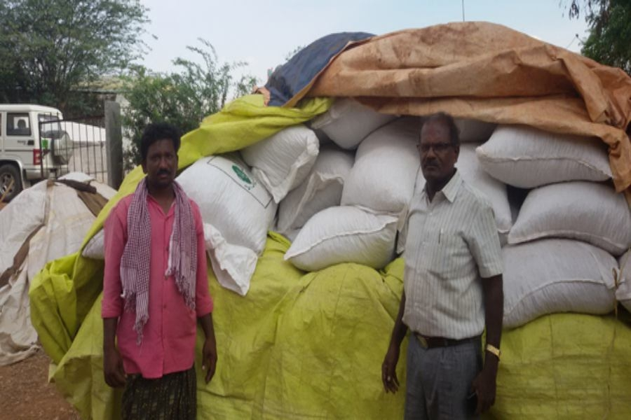 Farmers producing quality seed for groundnut crop