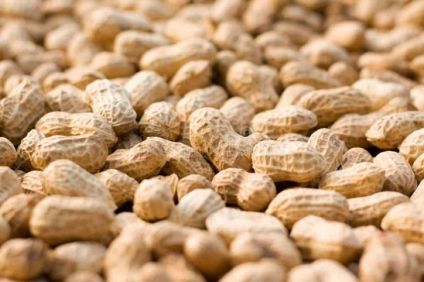 Groundnut farmers struggle to get MSP for crop in Mahbubnagar district of Telangana