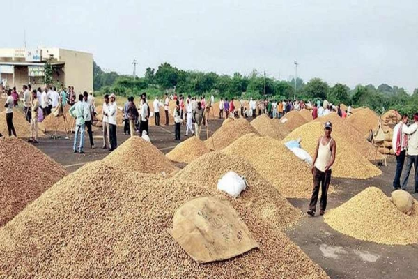 Gujarat's  groundnut exports likely to hit five-year low