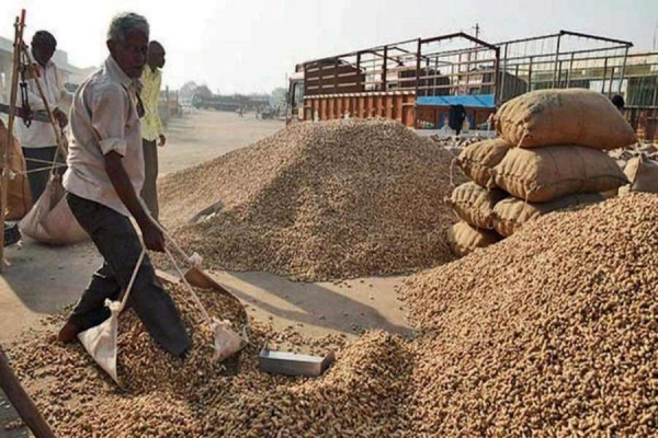 Higher MSP wont end farmers woes, say oil millers