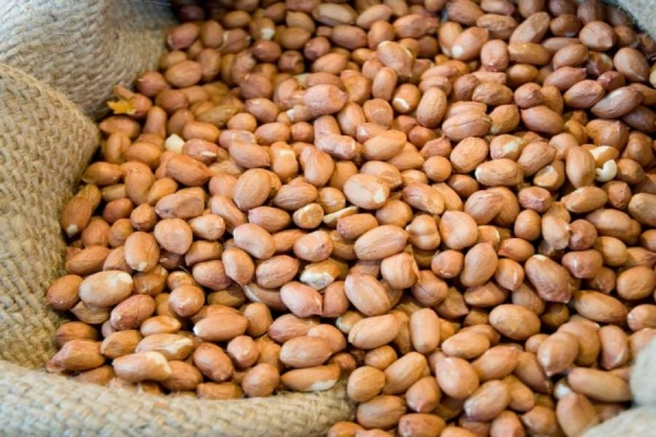 Short supply of groundnut seed being addressed