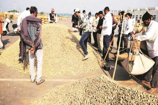 Low MSP, traders syndicate hit groundnut ryots below the belt