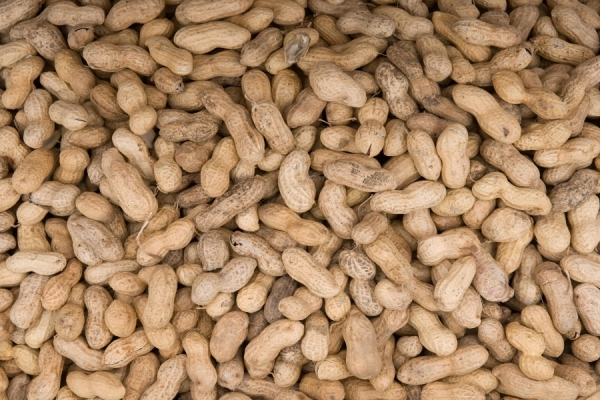 Gujarat's groundnut farmers rue slow paced procurement, high rejections