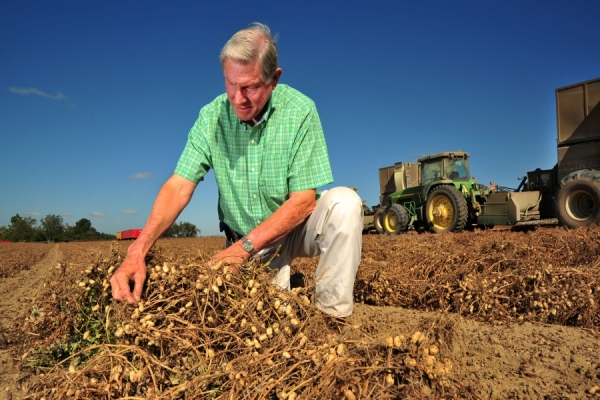 Terry County Peanut Grower Talks About Season, Thankful for Average to Above Average Yields