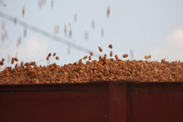 New federal rule changes peanut grading score