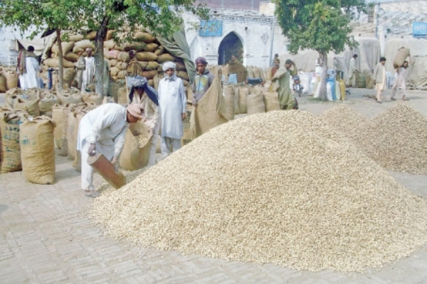 Castor may lose 25% area to groundnut, cotton