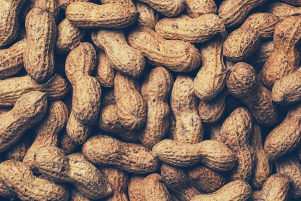 Gujarat to procure additional 1 lt of groundnut from Mar 5
