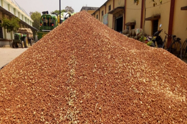 Farmers demand easing of curbs on lifting groundnut