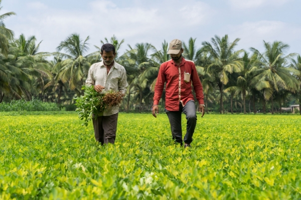 Tamil Nadu: 50 value addition units for better crop prices