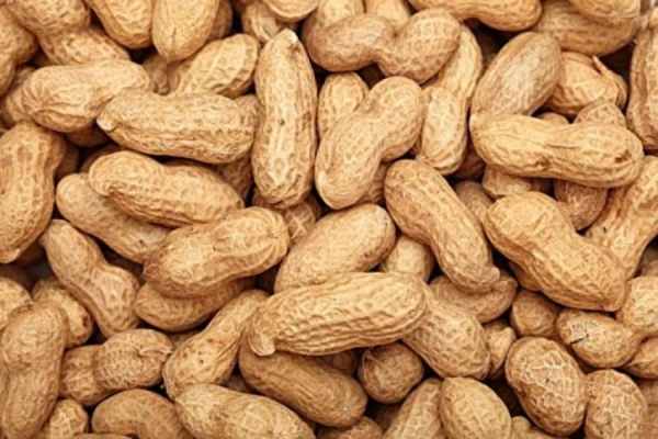 Centre may let millers process groundnut; supply oil via PDS