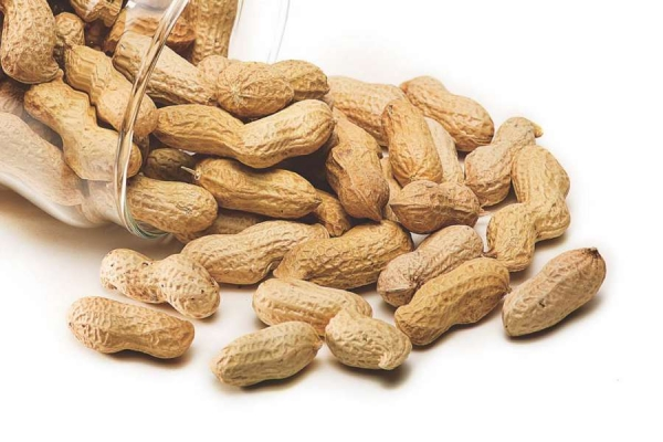 Attaining full-scale groundnut production