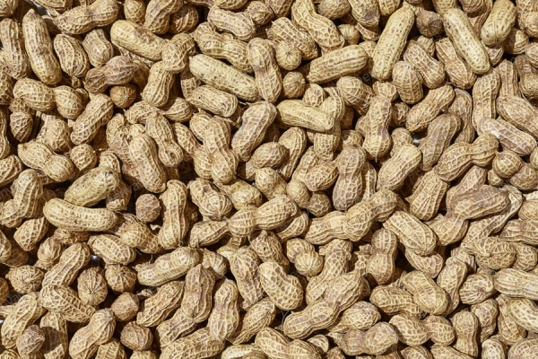 Traders call for nodal body that will bat for peanut consumption