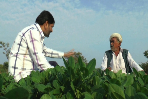 Farmers Set to Lose Rs 35,968 cr in Top 7 Crops This Season