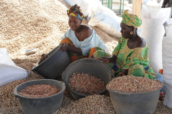 Senegal's Government Announces Removal of Peanut Export Tax