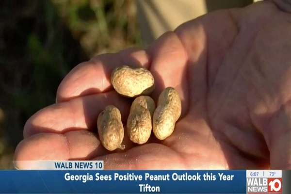 The peanut industry is thriving as farmers begin planting.