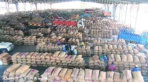 Gondal, Rajkot APMCs flooded with fresh arrivals of groundnut